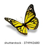 Stock photo color butterfly isolated on white background 374942680
