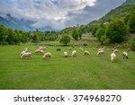 Herd Of Sheep Grazing In The...