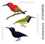 bird sunbird set cartoon vector ... | Shutterstock .eps vector #375038908
