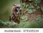 Hidden Portrait Long Eared Owl...
