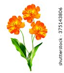cosmos flowers isolated on... | Shutterstock . vector #375143806