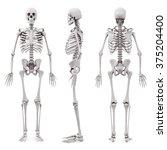 3d human skeleton on white... | Shutterstock . vector #375204400