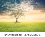 earth day concept  alone tree... | Shutterstock . vector #375206578