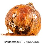 Halloween Pumpkin. Old Rotten