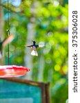 hummingbird  panama  central... | Shutterstock . vector #375306028