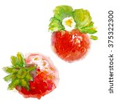 watercolor and strawberry leaf. ... | Shutterstock . vector #375322300