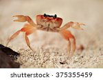 Big Red Crab On The Sand....