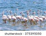 flamingos at the walvish bay in ... | Shutterstock . vector #375395050