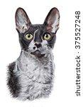Drawing Cat Cornish Rex ...