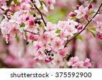 slender twigs  thrifty apple...   Shutterstock . vector #375592900
