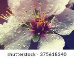 Almond Blossoms. Vintage...