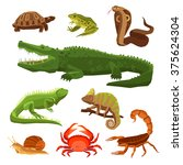 Reptiles And Amphibians...