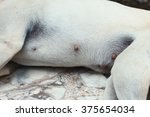 the dog breast area among... | Shutterstock . vector #375654034