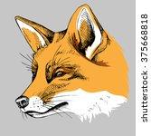 Fox Portrait. Vector...