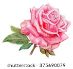 pencilled bright pink rose with ... | Shutterstock . vector #375690079