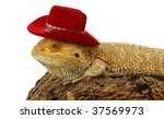 bearded dragon with hat | Shutterstock . vector #37569973