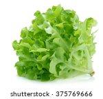 Green Oak Lettuce On White...