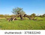 Tree  Broken By Lightning ...