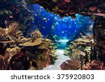 Aquarium With Plants And...