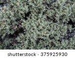 star shaped grass. | Shutterstock . vector #375925930