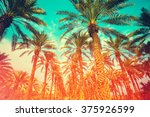 Vintage Date Palm Trees...