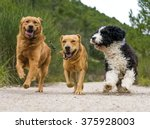 Stock photo photograph of a dogs running 375928003