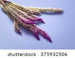 Dried Pink And Purple Tipped...
