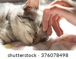 Stock photo woman hand petting a cat head love to animals 376078498