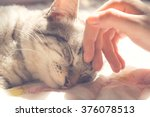 Stock photo woman hand petting a cat head love to animals vintage photo 376078513