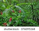 wet plants in tropical rain... | Shutterstock . vector #376095268
