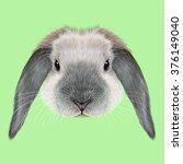 rabbit animal. illustrated...   Shutterstock . vector #376149040