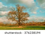 field with an only bare tree  ... | Shutterstock . vector #376238194