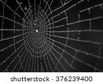 Wet Spiderweb On A Black...