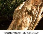 australian native tree | Shutterstock . vector #376310269