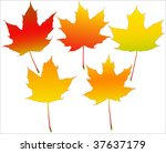 five autumn leafs set isolated... | Shutterstock .eps vector #37637179