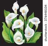 bouquet of white calla lilies... | Shutterstock .eps vector #376448104