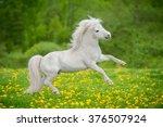 Happy White Shetland Pony...