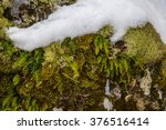 Moss. Forest Texture. Northern...