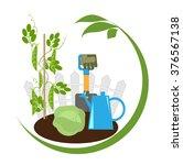 vegetable garden  vegetables in ... | Shutterstock .eps vector #376567138