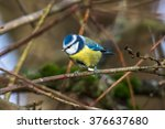 a blue tit is searching for... | Shutterstock . vector #376637680