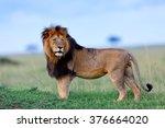 Beautiful And Powerful Lion...