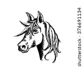 horse face. sketchy style. | Shutterstock .eps vector #376691134