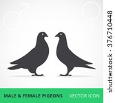 Two Pigeons Love Vector One...