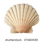 Shell Of The Sea