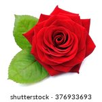 Stock photo red rose isolated on white background 376933693