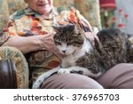Stock photo elderly woman with a cat on her knees 376965703