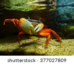 big red crab on the sand.... | Shutterstock . vector #377027809
