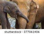 Stock photo elephant and baby elephant 377061406