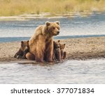 Safe With Mom   Three Grizzly...