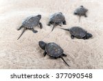 Turtles Hatched From Eggs In...
